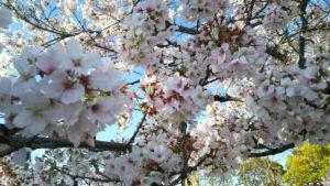 Photo_17-04-13-18-14-38.198