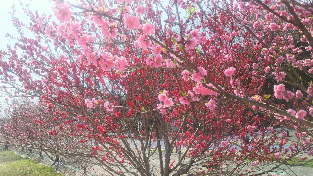 Photo_18-03-26-11-06-56.438