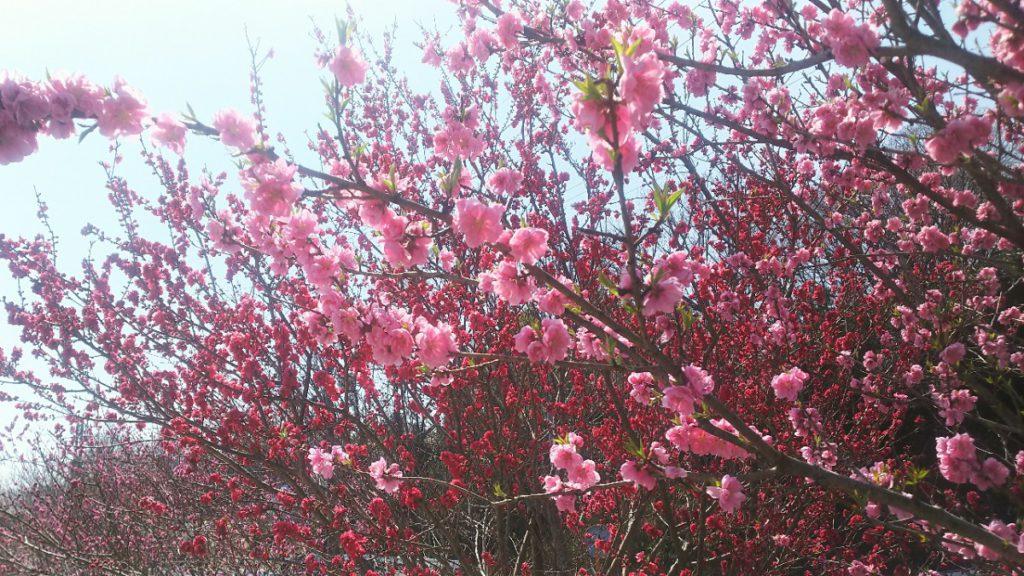 Photo_18-03-26-11-06-58.909