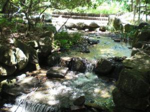 小幡緑地1